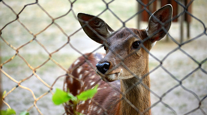 Deer Repellent/Fencing & Tick Control