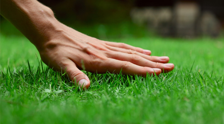 Custom Lawn & Shrub Care Programs
