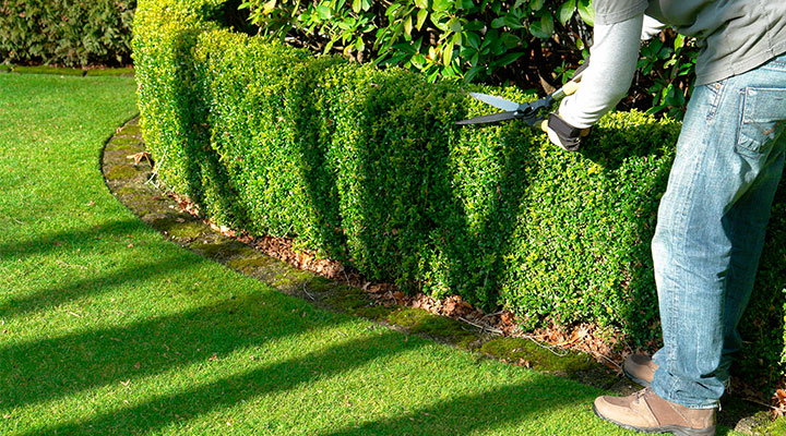 Grounds Maintenance, Lawn Mowing, Spring & Fall Clean Up
