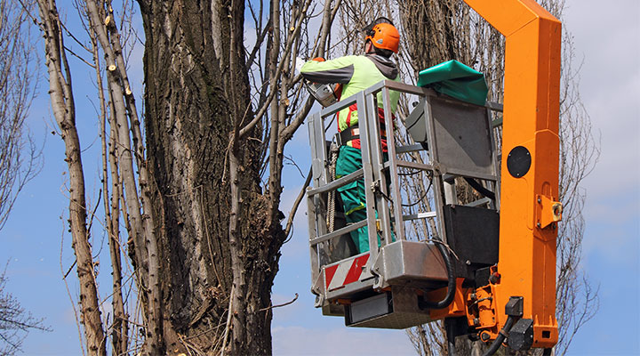 Tree Removal, Pruning & Stump Grinding