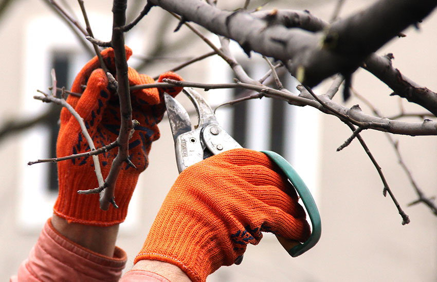 Tree removal services in Fairfield County